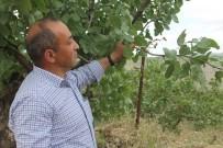 YAĞAN - Siirt'te Yağışlardan En Büyük Zararı Fıstık Bahçeleri Gördü