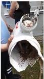 Su Borusuna Sıkışan Yavru Kedi İtfaiye Ekiplerince Kurtarıldı