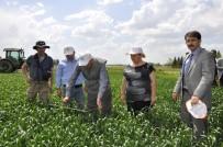 TOPRAK MAHSULLERI OFISI - Tarım Ve Orman Müdürü Sever, 'Süne-Sürvey' Çalışmalarını İnceledi