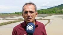 Kastamonu'da Üreticilerin Zorlu Çeltik Mesaisi Başladı