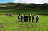 Kaybolan Hayvanları Jandarma Drone İle Buldu