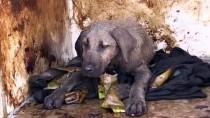 Zifte Yapışan Köpek Yeni Yuvasına Kavuştu