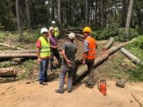 Halk Eğitimi Merkezi'nden Ağaç Kesme Ve Boylama Kursu