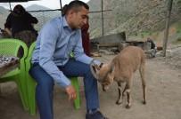 Köy Muhtarı 2 Yıldır Yavru Dağ Keçisini Besliyor
