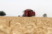 Kozan'da Buğday Sezonu Açıldı