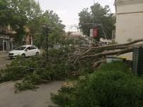 Nevşehir'de Rüzgar Ağaçları Devirdi