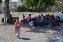 Ayvalık'ta 66 Kaçak Göçmen Yakalandı