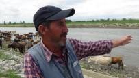 YEŞILCE - Büyükbaş Hayvanların Nehirden Tehlikeli Geçişi