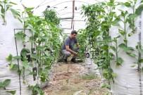Elektrik Mühendisi, Serasında 'Çuval'la Para Kazanıyor