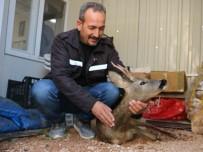 Yavru Karacayı Derede Boğulmaktan Orman Çalışanları Kurtardı