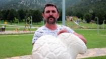 BAĞBAŞı - Denizli'de 7 Kilo 125 Gramlık Dev Mantar Bulundu