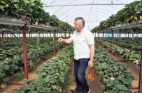 Jeneratör İle Topraksız Tarım Yapıyor