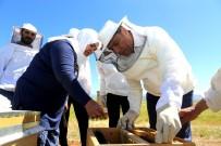 Bingöl'ün Balına Değer Katacak Proje 'Ana Arı Ve Sütü Üretimi'