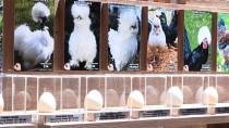 AKARÇAY - 'Dünya Tavukları Ve Yumurta Sergisi' Açıldı
