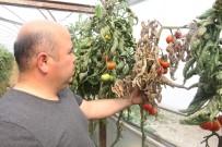 Çiftçinin Kabusu 'Tuta' Geri Döndü