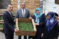 Gümüşhane'de Çiftçilere 145 Bin Adet Domates Ve Salatalık Fidesi Dağıtıldı