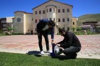 Bayburt Üniversitesi'nde 'Hayvan Dostu Kampüs Projesi' Hayata Geçirildi