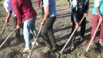 MUHAMMED İKBAL - Muş'ta Mevsimlik Tarım İşçilerinin Ramazan Mesaisi