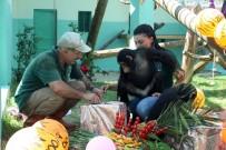 Hayvanat Bahçesindeki Şempanzelere Sürpriz Doğum Günü Partisi