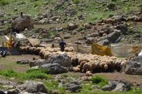 Yaylalarda Koyun Kırkma Dönemi Başladı
