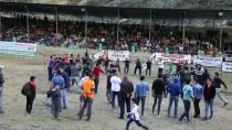 Artvin'de Boğa Güreşi Festivali