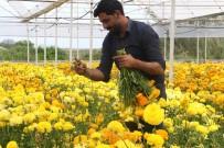 İşçi Olarak Başladığı Seralarda Bugün Yurt Dışına Çiçek İhraç Ediyor