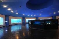 DENİZ CANLILARI - Altınok Açıklaması 'Deniz Dünyamız Bir Cazibe Merkezidir'