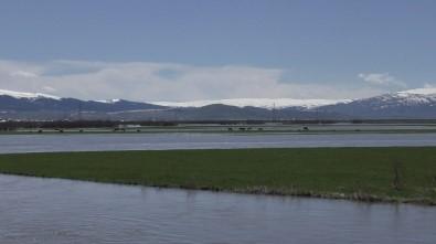 Kura Nehir Taştı, Ova Sular Altında Kaldı