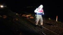 Gercüş'te Araçlar Koyun Sürüsüne Daldı Açıklaması 50 Koyun Telef Oldu, 5 Yaralı
