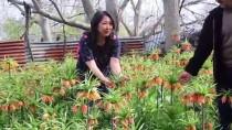 'Ağlayan Gelin'e Japon Ziyaretçi