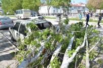 Çürük Kavak Ağacı Otomobilin Üzerine Devrildi