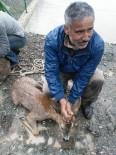 HES Kanalına Düşen Karacalar Boğulmaktan Kurtarıldı
