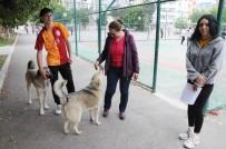 MÜZİK ÖĞRETMENİ - Mersin'de Hayvan Dostu Okul