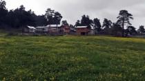 Bolu'nun Yaylalarında İki Mevsim Bir Arada Yaşanıyor