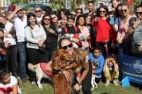 ÇEKİLİŞ - Tay Park'ta Şenlik Var