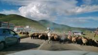 Koyun Sürüsü Yola İndi, Sürücüler Beklemek Zorunda Kaldı