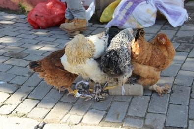 KKKA hastalığına karşı en etkili önlem tavuklar