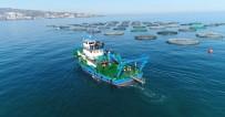 GÖKKUŞAĞI - Trabzon'da Yetiştirilen  Balıkların Yüzde 90'I İhraç Ediliyor