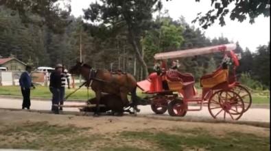Abant'ta, Faytona Bağlı Bir At Sıcak Ve Yorgunluktan Bayıldı