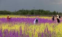 Bozkır'da Açan Çiçekler Bayburt'a Renk Kattı