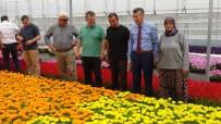 EDREMIT BELEDIYESI - (Özel) Kazdağları'nın Etekleri Çiçek Açacak