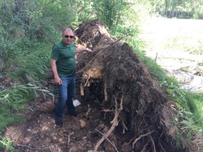 Bayburt'ta Fırtına Ağaçları Kökünden Söktü