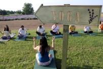 EGZERSİZ - 'Lavanta' Tarlasında Yoga İle Güne Başladılar