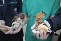 Yaralı Ebabil Ve İbibik Kuşu, Tedavi Altına Alındı