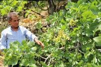 Badem Ağacından 5 Tür Meyve Topluyor