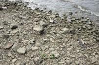 Bayramhacılı Barajındaki Balık Ölümleriyle İlgili İnceleme Başlatıldı