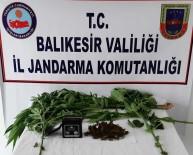 HAŞHAŞ - Jandarmadan Uyuşturucu Tacirlerine Savaş