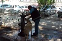 Sıcaktan Bunalan Köpeğe Polis Şefkati