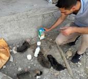Yavru Köpekler Dicle Elektrik Ekibi Sayesinde Kurtuldu