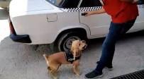 POMPALI TÜFEK - Narkotik Köpeği Önce Buldu, Sonra Poz Verdi